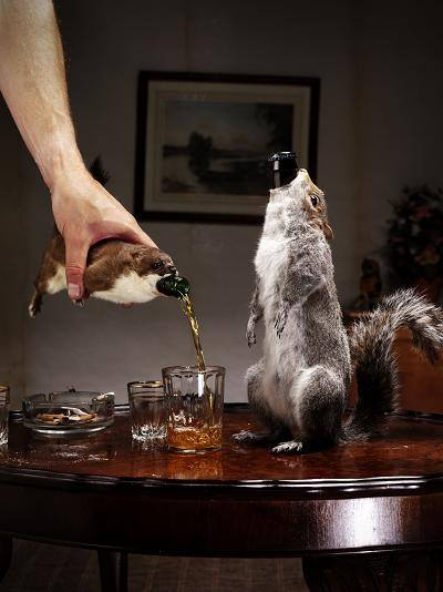 Brewdog Taxidermy